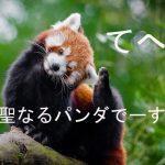聖なるレッサーパンダ